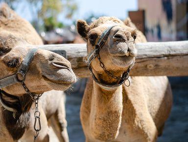 Верблюды, мечеть и соляная пустыня: семейное путешествие по Кипру