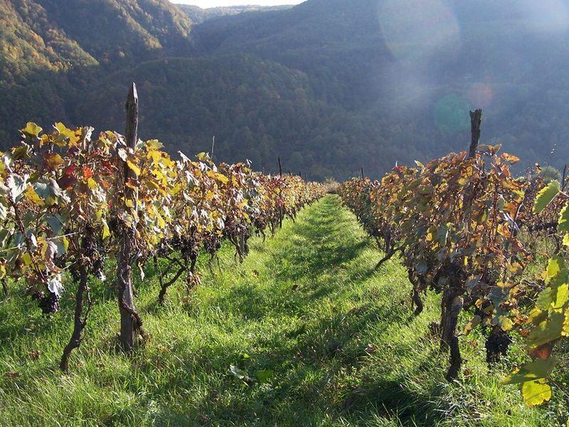 Дорогу в Кахетию осилит... ценящий вино! width=