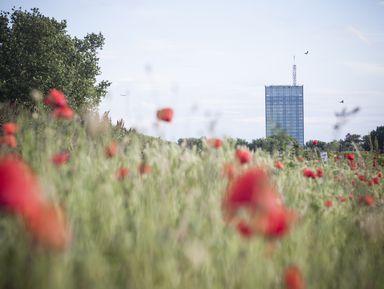 Необычные экскурсии в Белграде на русском языке – цены на экскурсии 2021 года