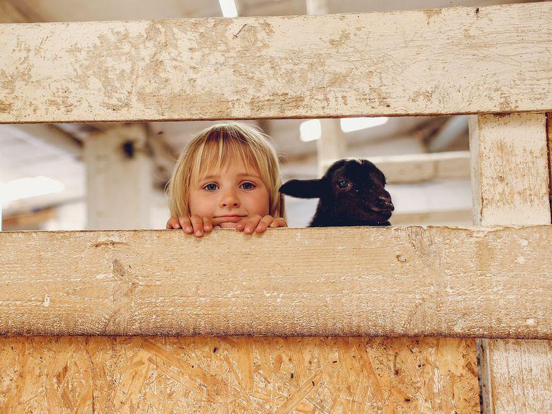 Экскурсия Тула: один день надействующей ферме