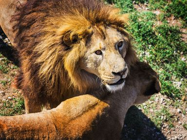 Парк львов «Тайган»: путешествие вкрымскую Африку